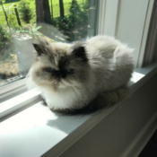 Loaf of the Day – 9/13/17