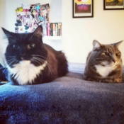 Loaf of the Day – 8/30/17