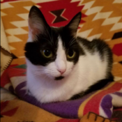 Loaf of the Day – 8/11/17