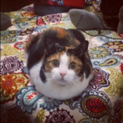Loaf of the Day – 8/14/17