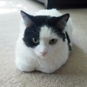 Loaf of the Day – 8/19/17