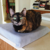 Loaf of the Day – 8/31/17