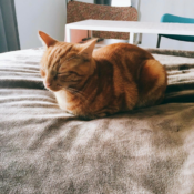 Loaf of the Day – 9/3/17