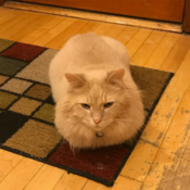 Loaf of the Day – 8/28/17