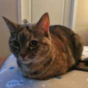 Loaf of the Day – 8/17/17