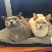 Loaf of the Day – 9/29/17