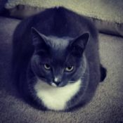 Loaf of the Day – 10/20/17
