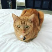 Loaf of the Day – 10/19/17