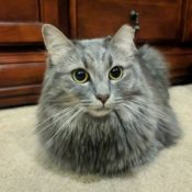 Loaf of the Day – 10/14/17