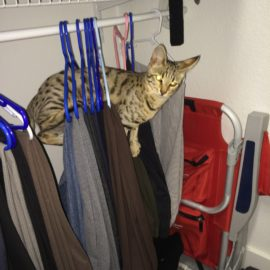 Bad Kitty in Closet