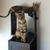 Cats on Cat Tree
