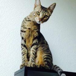 Django on Cat Tree