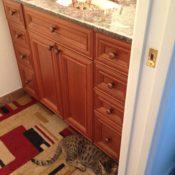 Kitty Hiding in Sink