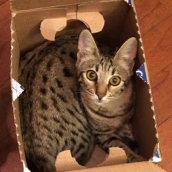 Kitty in Box