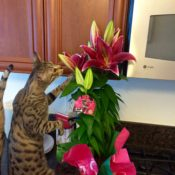 Nosey Kitty with Flower
