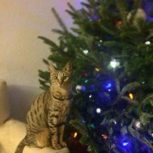 Arya_Xmas_Tree-2