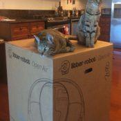 Litter-Robot-Unboxing-1