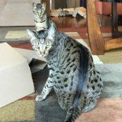 Kitty Box Party