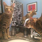 Thirsty Kitties