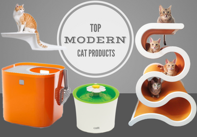 Top Modern Cat Products