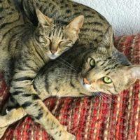Arya & Django Cuddling