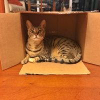 Arya in Box – 1