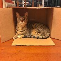 Arya in Box – 1