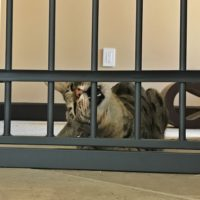 Arya testing the Pet Gate