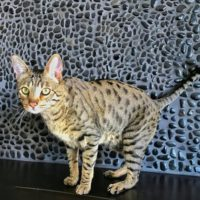Django Rock Wall