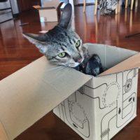 Django in Box – 1