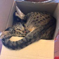 Django in Box – 2