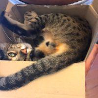 Django in Box – 3