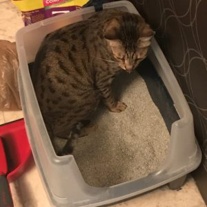 Django in IRIS Litter Box – 1