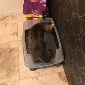 Django in IRIS Litter Box – 2