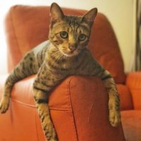 Django on Armchair
