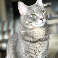 Puddles Gazing