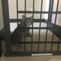 Puddles testing the Pet Gate