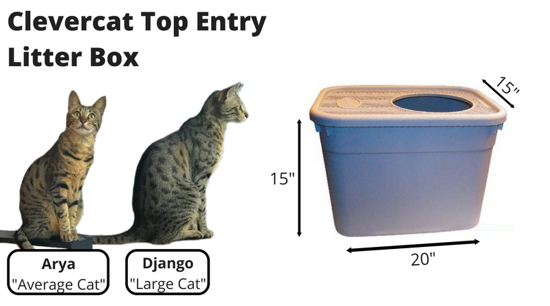 Clevercat Top Entry Litter Box Review Kitty Loaf