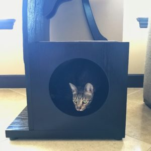 Lotus Cat Tower with Django in Cubby