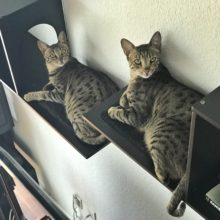 Arya & Django – Sophia Cat Shelves (2)