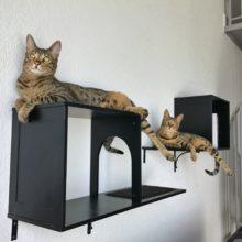 Arya & Django – Sophia Cat Shelves (3)