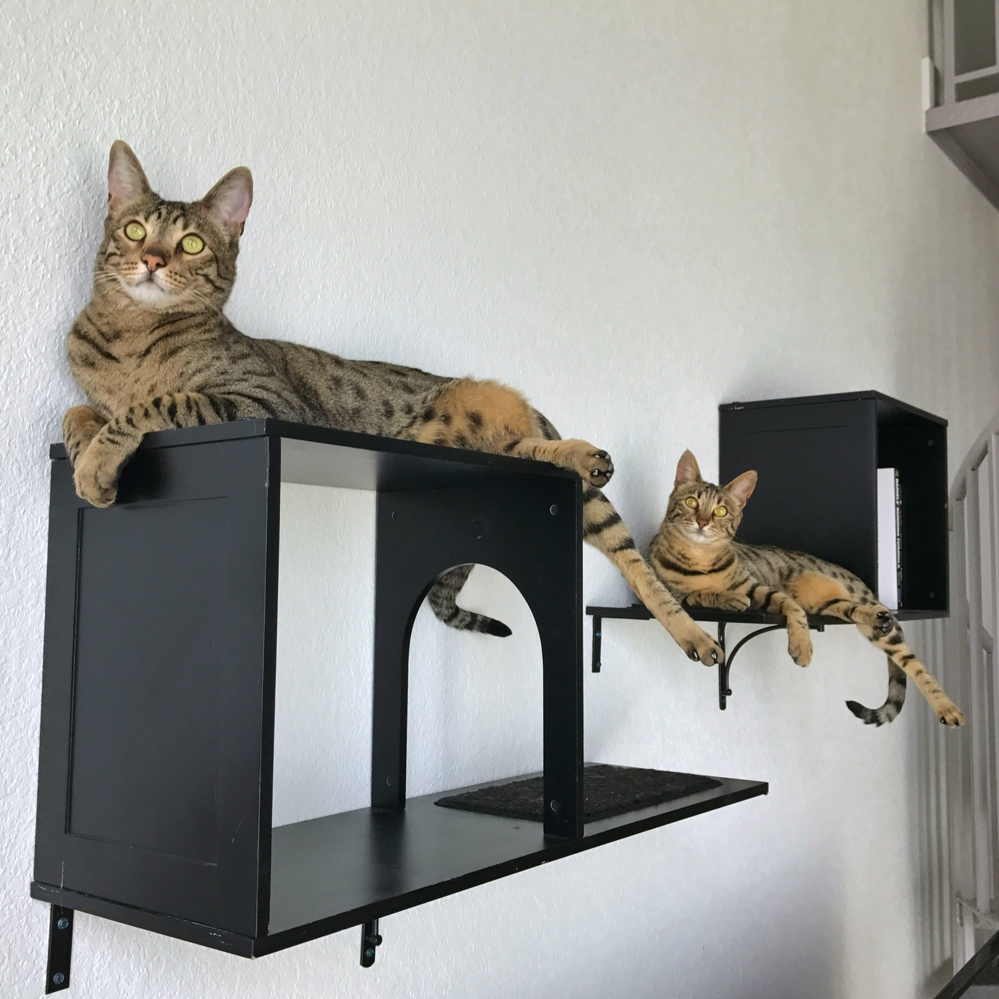 Sophia wall mounted cat tree review kitty loaf - Wall mounted cat climber ...