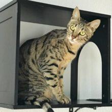 Arya – Sophia Cat Shelf Cubby