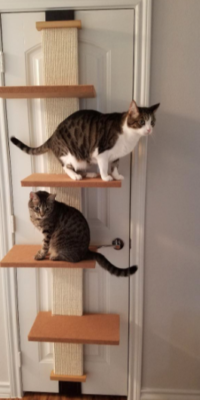SmartCat Multi-Level Cat Climber – 2 Cats – Luke