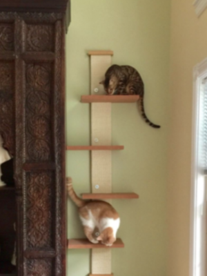 SmartCat Multi-Level Cat Climber – Wall Mount – ArthurGRay
