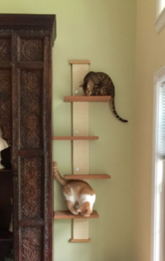 smartcat multi level cat climber review kitty loaf