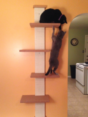 SmartCat Multi-Level Cat Climber – Wall Mount – CaitlinSampsel