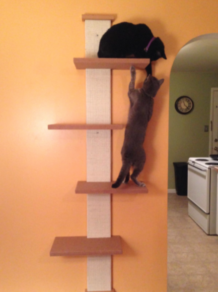Smartcat multi level cat climber review kitty loaf - Wall mounted cat climber ...