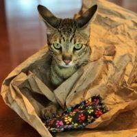 Catnip Pillows – Django