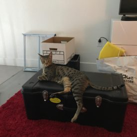 Django Helping with the Move